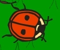 The Lady Bug